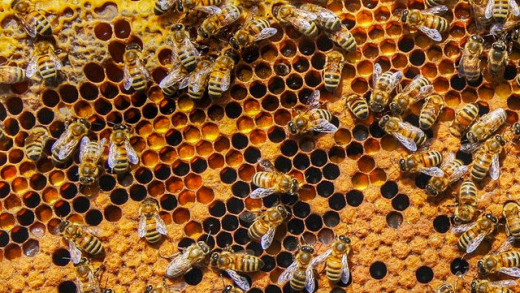05192015bees