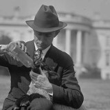 A man feeds sheep on the White House lawn