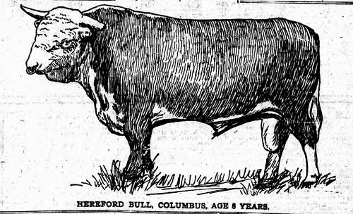 Frank Rockefeller's Bull
