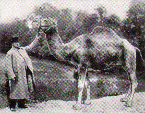 First Picture of Camel Cigarettes Old Joe