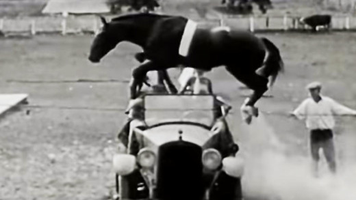 Horse jumping over a car