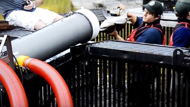 The Salmon Cannon